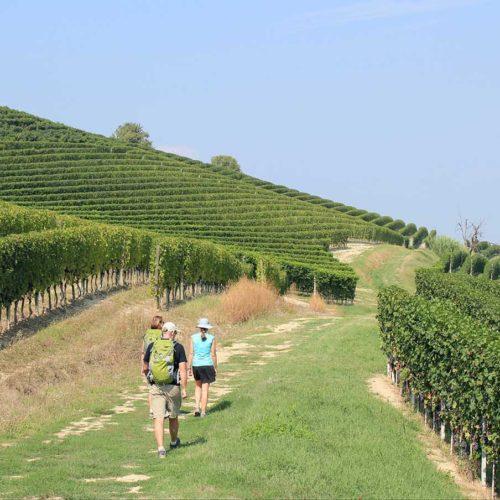 Piedmont (Piemonte) wine country. Hiking amongst Barolo, Barbaresco vineyards