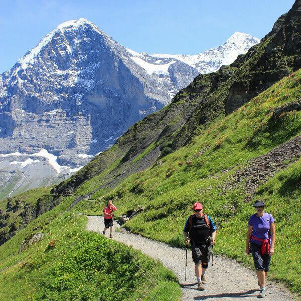 oberland bernese in fiore | Eiger