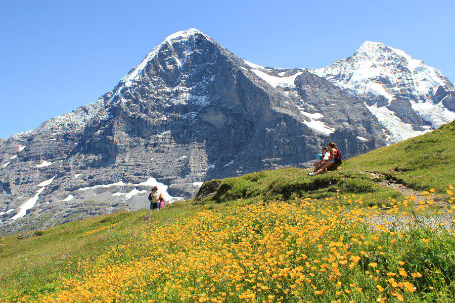 wildflowers of the bernese oberland | north face of the eiger