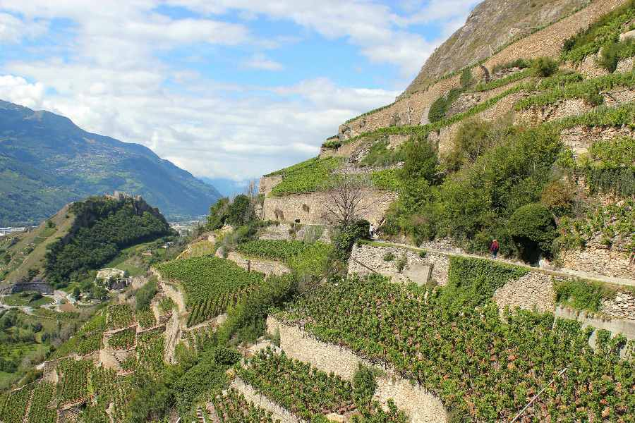 undiscovered valais | vineyards