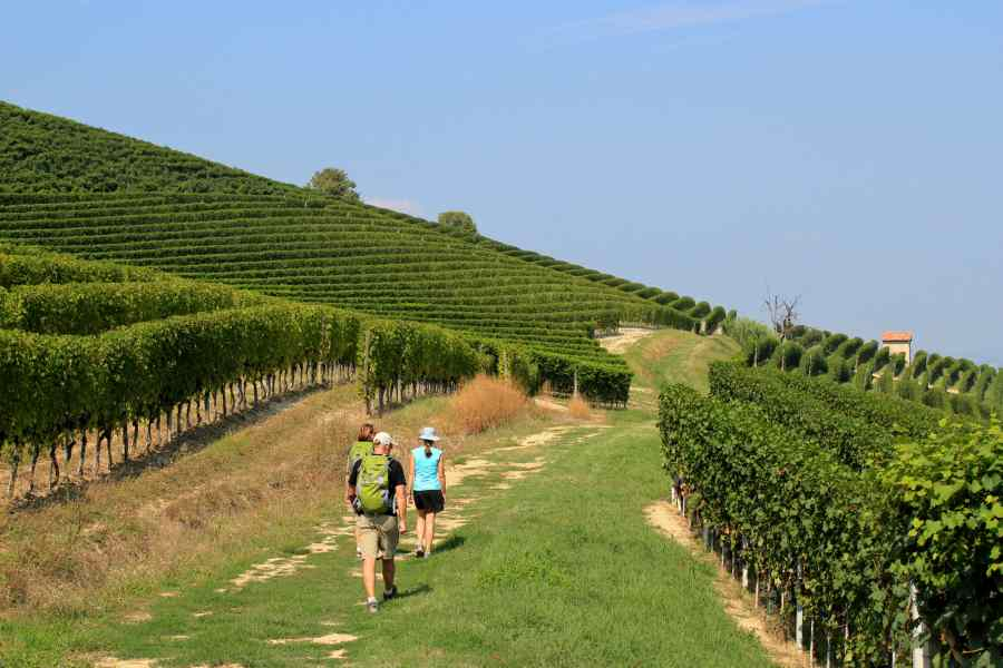 the langhe - pidmont's wine country - vineyards