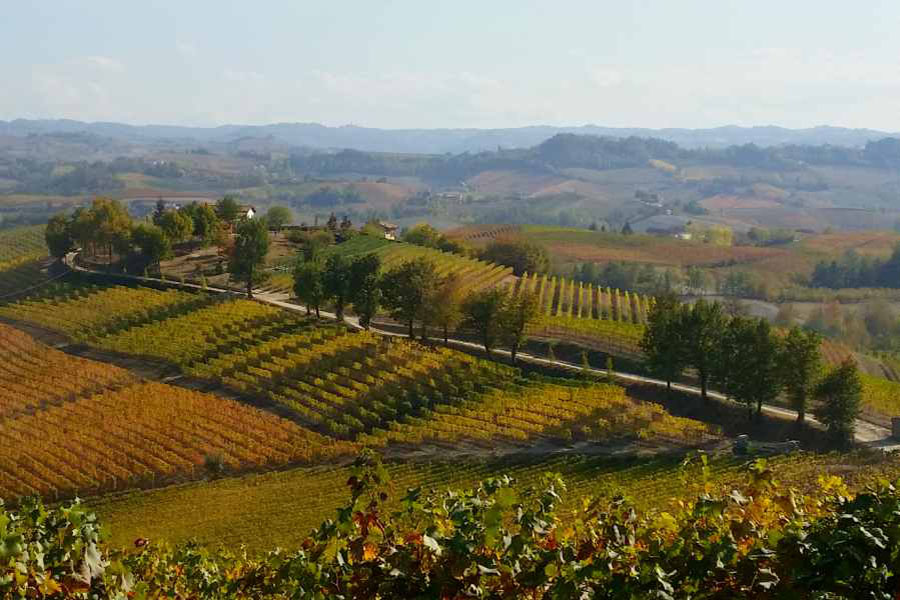 the langhe - pidmont's wine country - vineyards in autumn