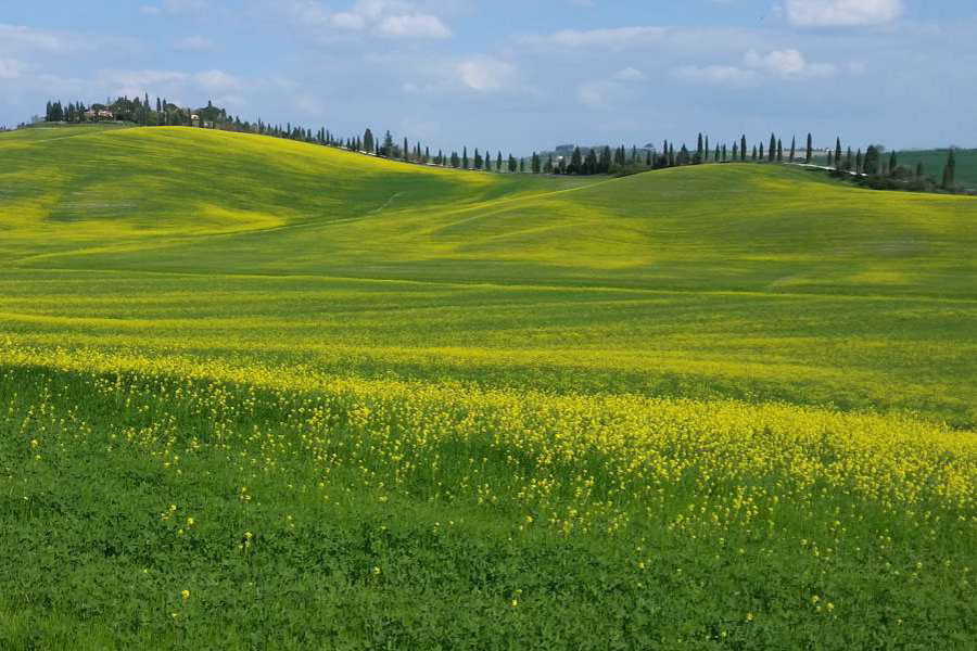 gems of tuscany - landscape of siena